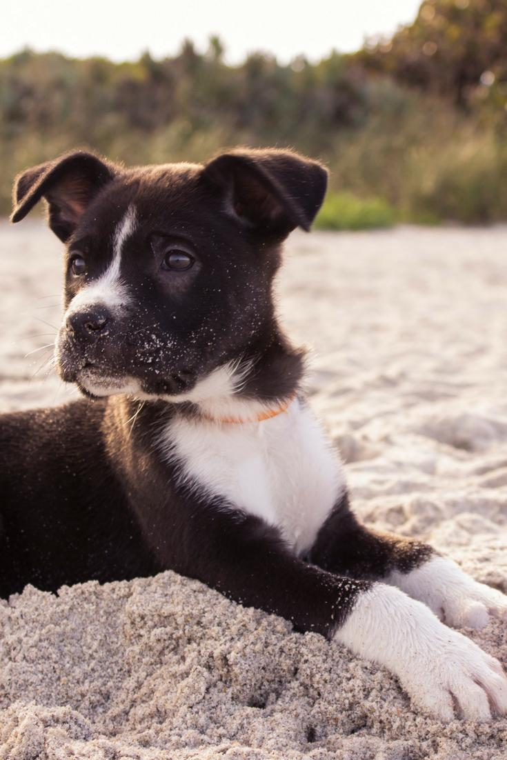 How To Stop Puppy Biting: The Positive Reinforcement Way
