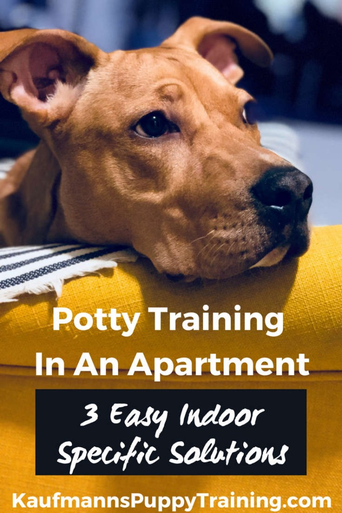 Learning how to potty train a puppy can be a challenge. And living on the fourth floor in a big city doesn't make it any easier. I've written about potty training a puppy before, but today I'll concentrate on potty training when you live in an apartment. These three easy indoor solutions also work if you and your puppy or dog have a hard time getting out as often as you need or want to for whatever reason. Read more at www.kaufmannspuppytraining.com @KaufmannsPuppy